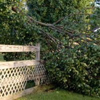 Awarding Responsibility for Downed Trees in New Jersey